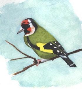 Stevens,Darrell-Goldfinch