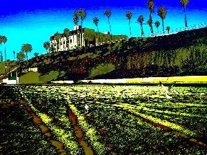 Long Beach color