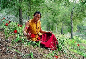 Tibetan Doctor in the woods