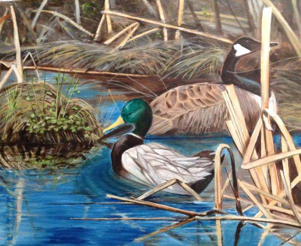 Mallard Drake with Canada Goose