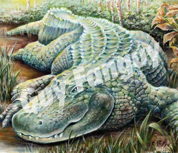Louisiana Alligator