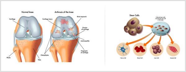 Medical illustration services