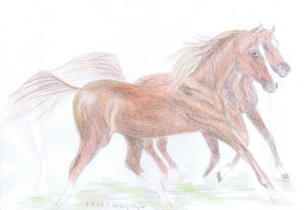 Pair of arabian horses