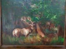 The Roosevelt Elk