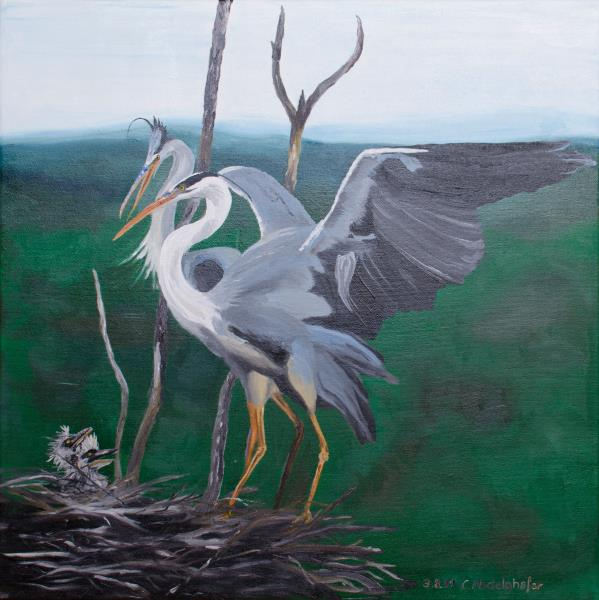 Luethi Abdelghafar,Claudia-Grey herons