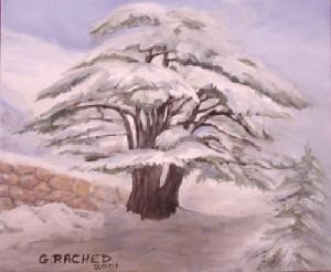 Millenary Cedar Tree