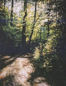 Road to Kortowo