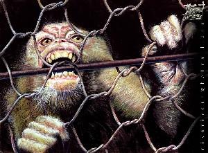 Ape Cage