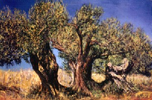 Olive trees at the Zingaro (Gipsy)