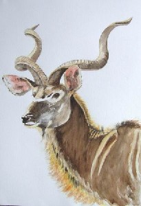 Proud Kudu