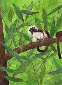 Tamarin in the Tree