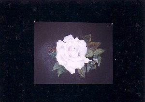 Study of a single white rose