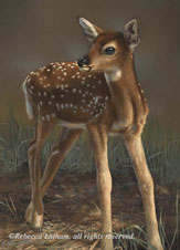 First Steps - Fawn