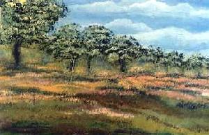 Hassan,Barrak-Paysage Nature