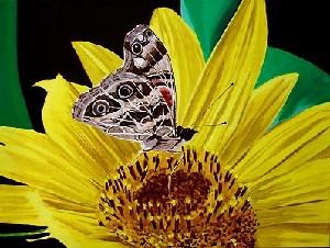 Sakjo,Renata-Butterfly