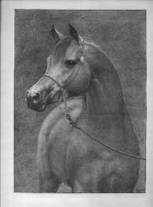 Arabian2